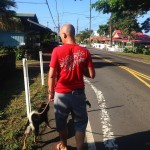 Morning walk with Maui bear in the new hood holualoahellip